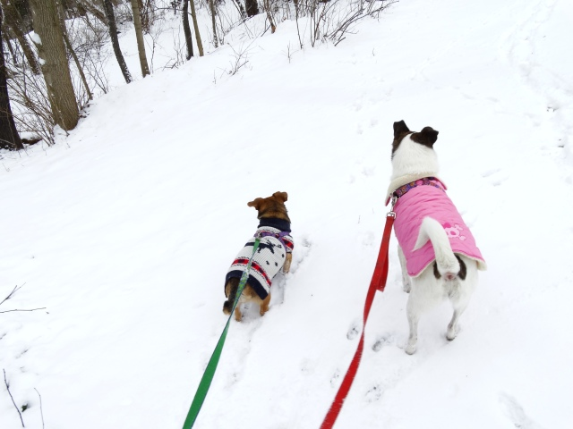 2 Dogs in Snow_